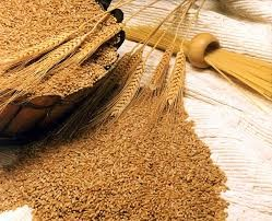 مصرف سبوس گندم جهت درمان یبوست